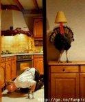 funny-turkey